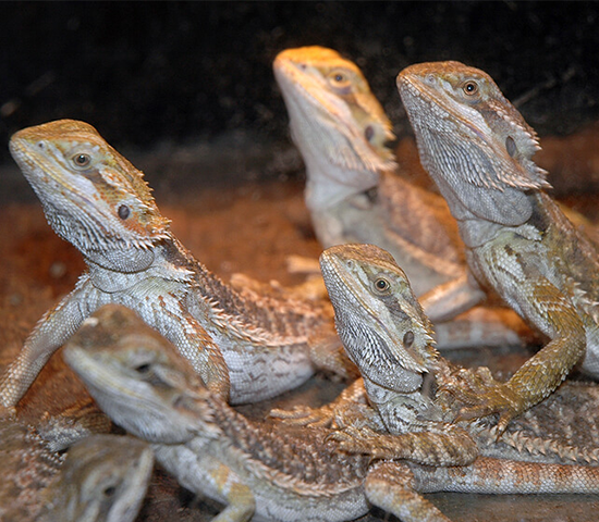 Click Big Deals - Get a 2 Person Admission to Reptile Gardens for 50% OFF! A $38 value, half-price for just $19!