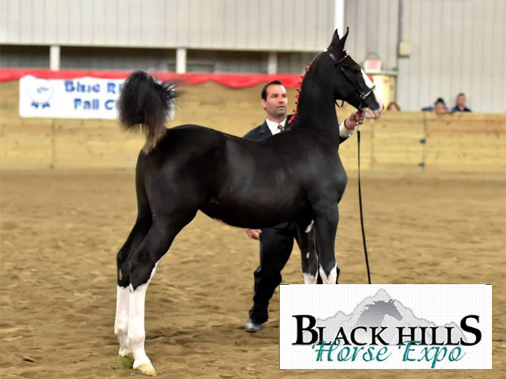Family Fun at the Black Hills Horse Expo!