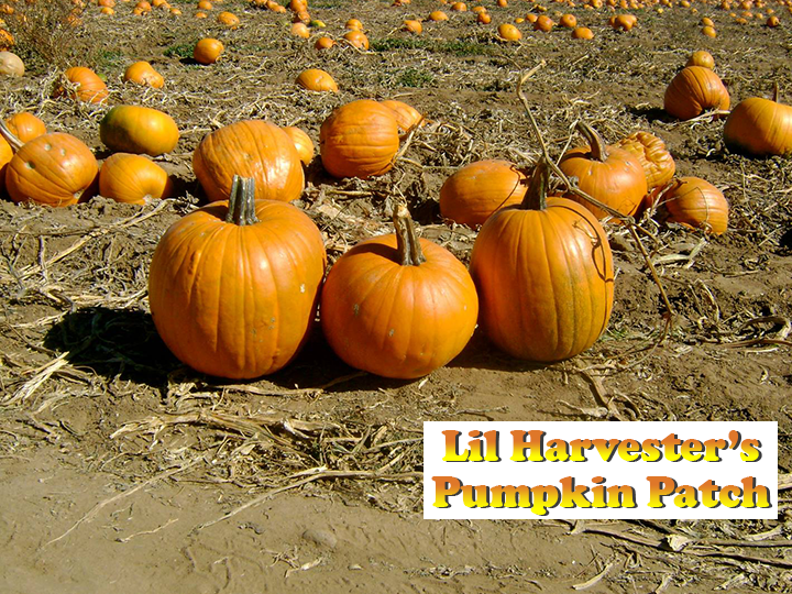 This Fall: Get all-day admission for 4 to Lil Harvester's Pumpkin Patch for ONLY $20! Save 50%!