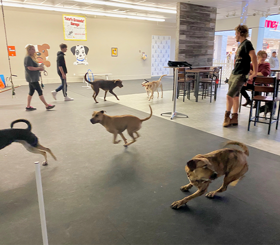 What a barkin' good deal!  1 month unlimited access for one dog at Bar K9 Indoor Dog Park and Bar for ONLY $14.50! That's 50% OFF!