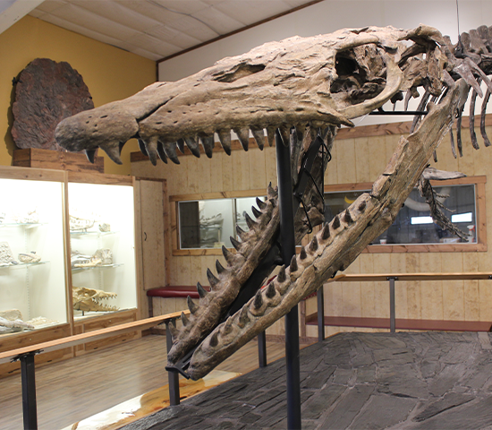 Click Big Deals - Come in and Experience the Black Hills Newest Dinosaur & Fossil Attraction  World Fossil Finder Museum! Family 4 Pack Just $16! A $32 Value!