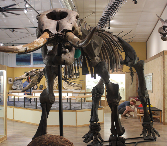 Come in and Experience the Black Hills Newest Dinosaur & Fossil Attraction  World Fossil Finder Museum! Family 4 Pack Just $16! A $32 Value!