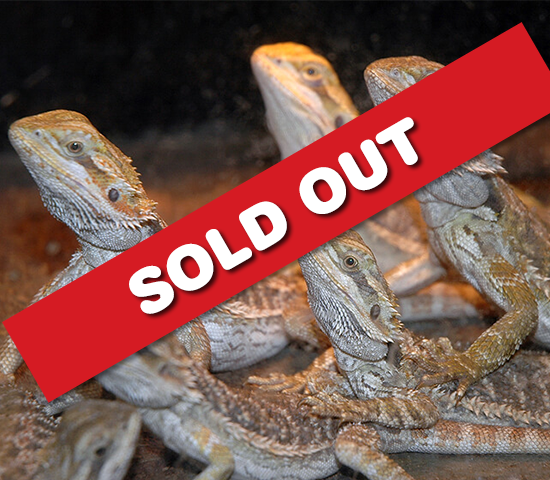 Get a 2 Person Admission to Reptile Gardens for 50% OFF! JUST $18!